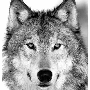 20x papieren servetjes met wolven 33 x 33 cm kopen
