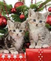 20x papieren servetjes met kittens 33 x 33 cm