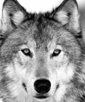 80x papieren servetjes met wolven 33 x 33 cm